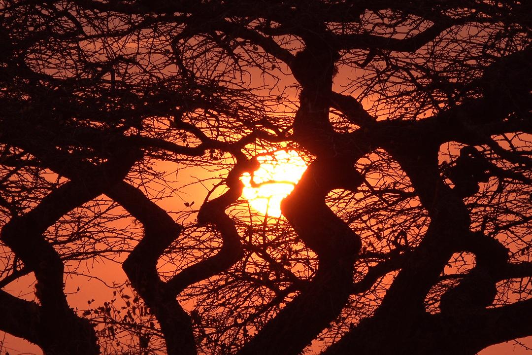 Vabilo na intimno predstavo - ogled filma Maasai - the joy